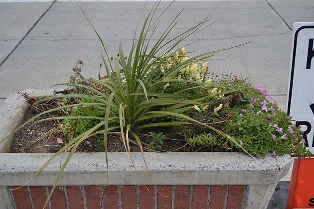 downtown planter