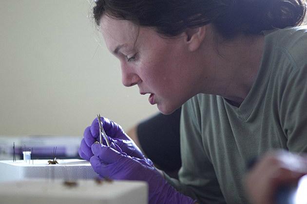 Oregon State University Honey Bee Lab