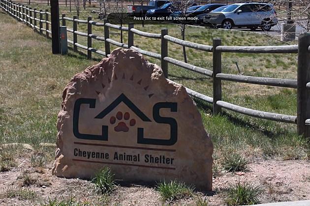 Cheyenne Animal Shelter