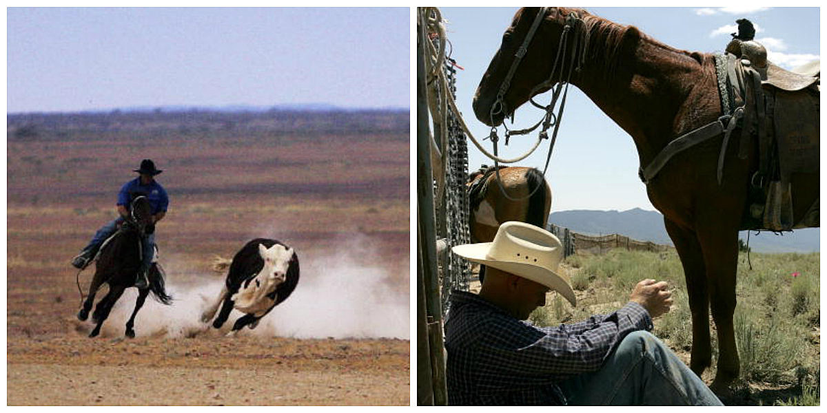 Getty Images, Wrangler Travis Pendleton of KG Livestock Photo by Justin Sullivan, 2005 Great Australian Outback Cattle Drive  Photo by Ian Waldie