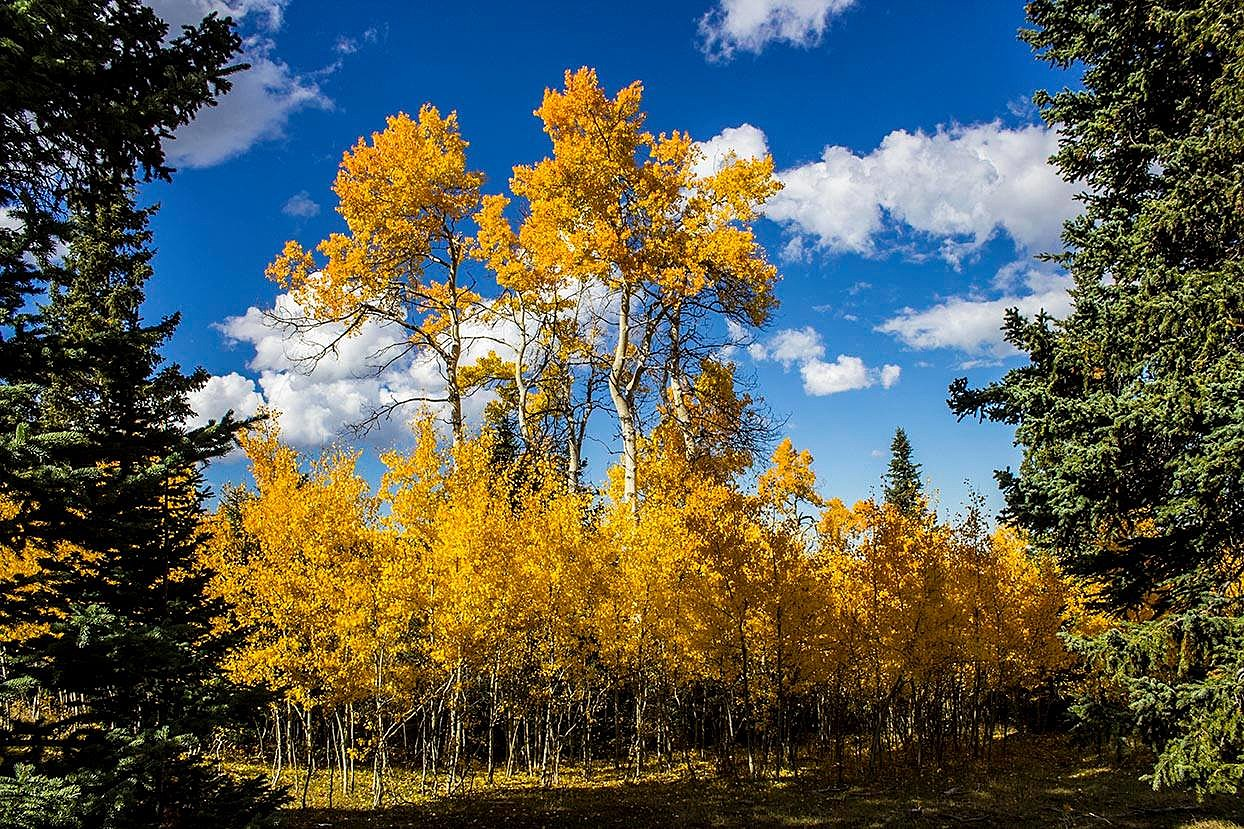 Wyoming Gold, Photo By Tim From Tampa